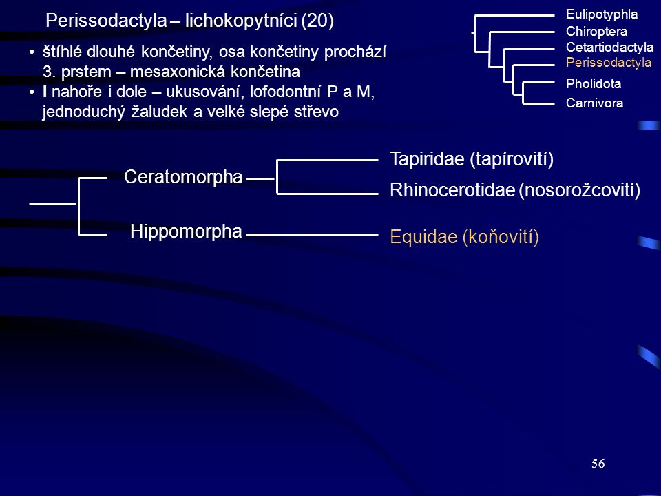 Perissodactyla – lichokopytníci (20)