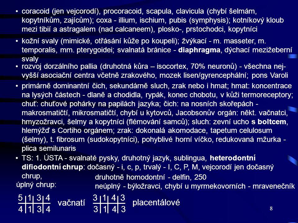 coracoid (jen vejcorodí), procoracoid, scapula, clavicula (chybí šelmám, kopytníkům, zajícům); coxa - illium, ischium, pubis (symphysis); kotníkový kloub mezi tibií a astragalem (nad calcaneem), plosko-, prstochodci, kopytníci