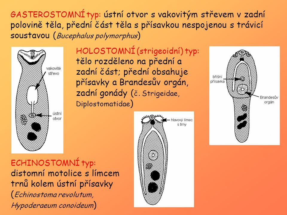 GASTEROSTOMNÍ typ: ústní otvor s vakovitým střevem v zadní polovině těla, přední část těla s přísavkou nespojenou s trávicí soustavou (Bucephalus polymorphus)