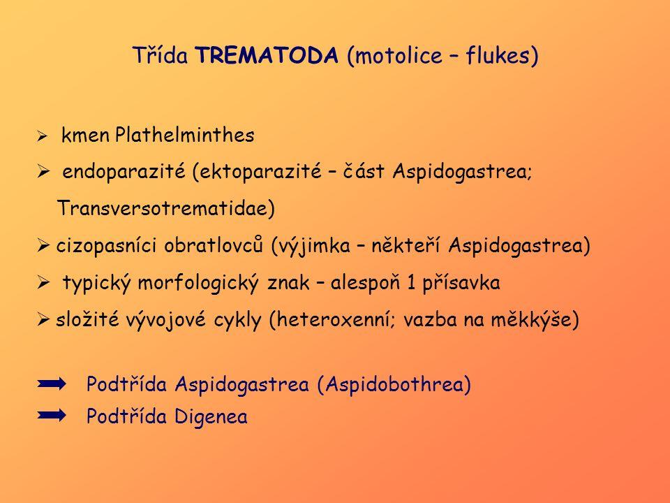 Třída TREMATODA (motolice – flukes)