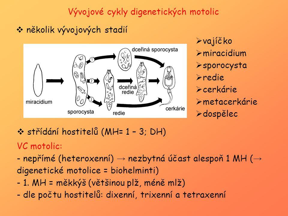 Vývojové cykly digenetických motolic