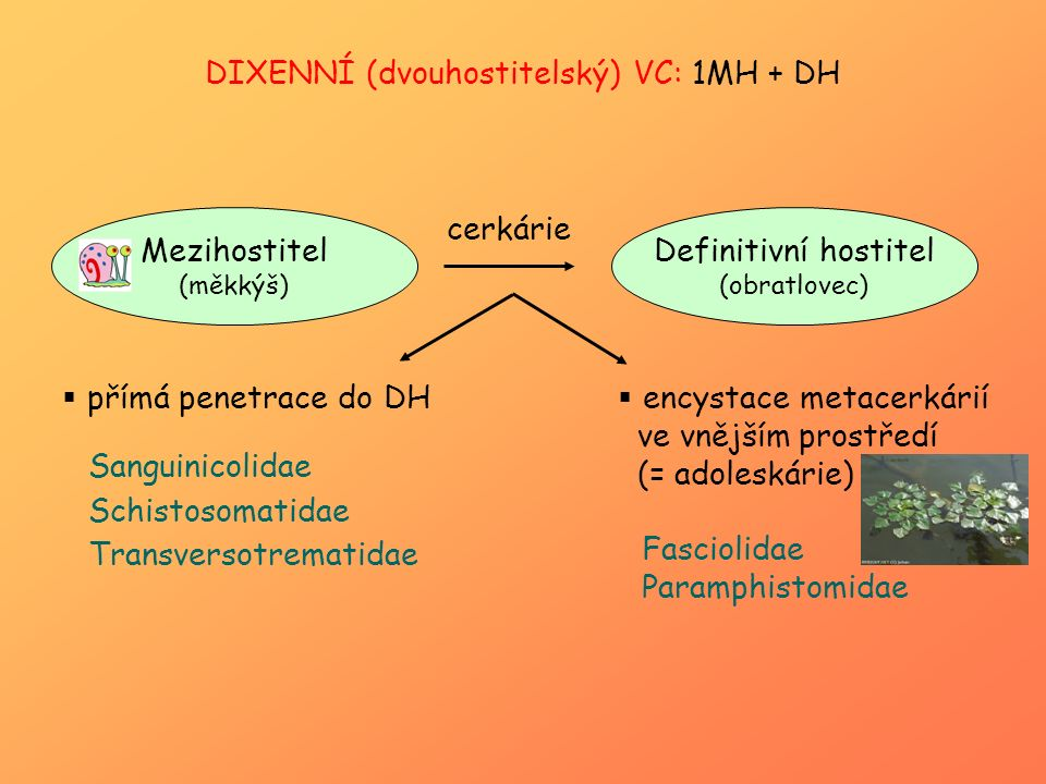 DIXENNÍ (dvouhostitelský) VC: 1MH + DH