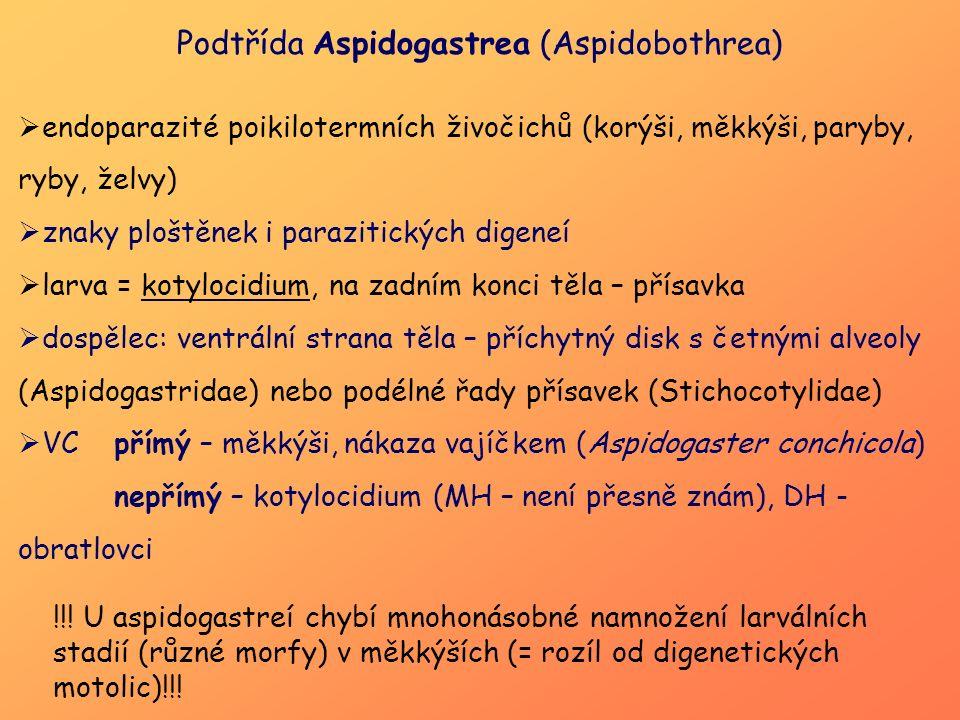 Podtřída Aspidogastrea (Aspidobothrea)