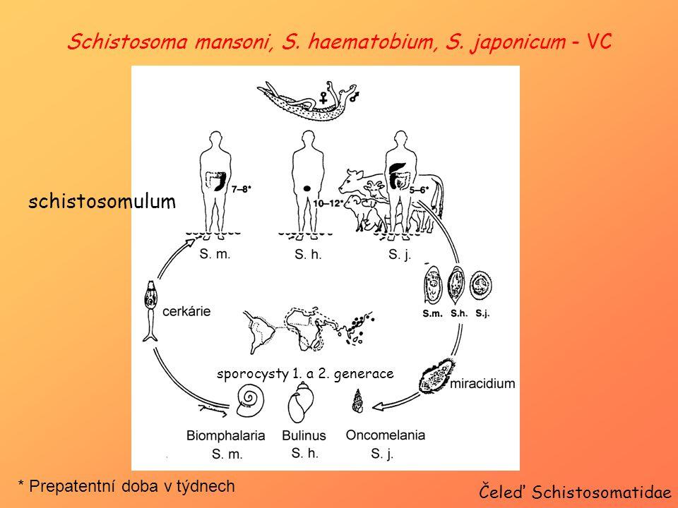 Schistosoma mansoni, S. haematobium, S. japonicum - VC