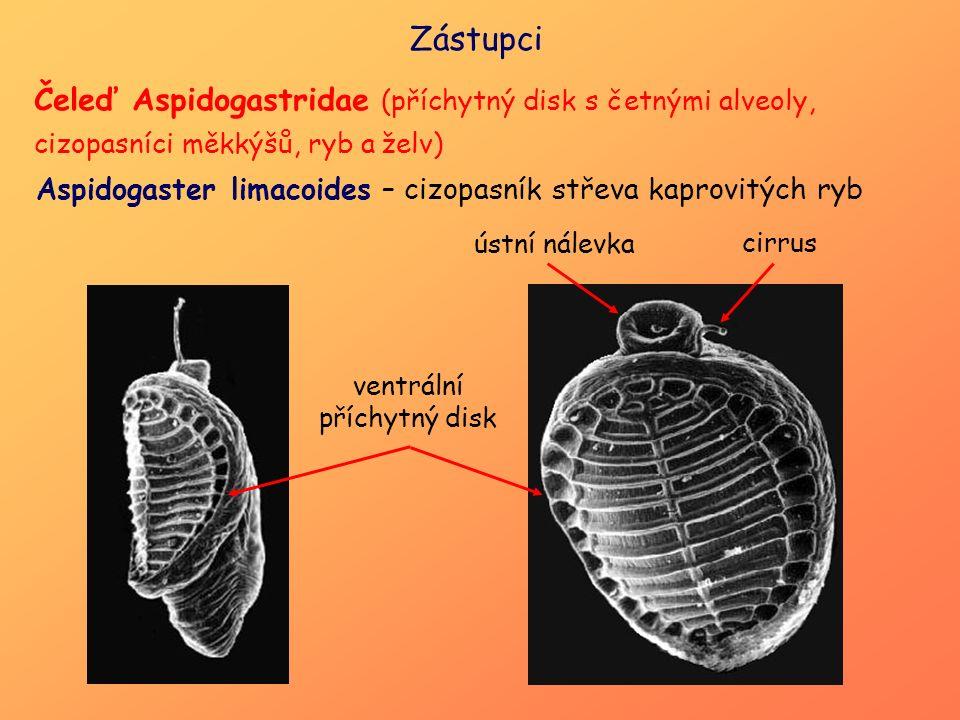 ventrální příchytný disk