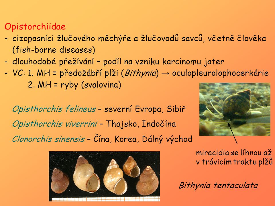 Opistorchiidae cizopasníci žlučového měchýře a žlučovodů savců, včetně člověka (fish-borne diseases)