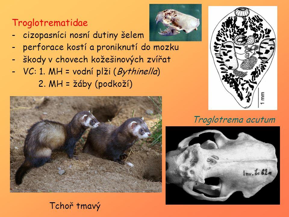 Troglotrematidae cizopasníci nosní dutiny šelem