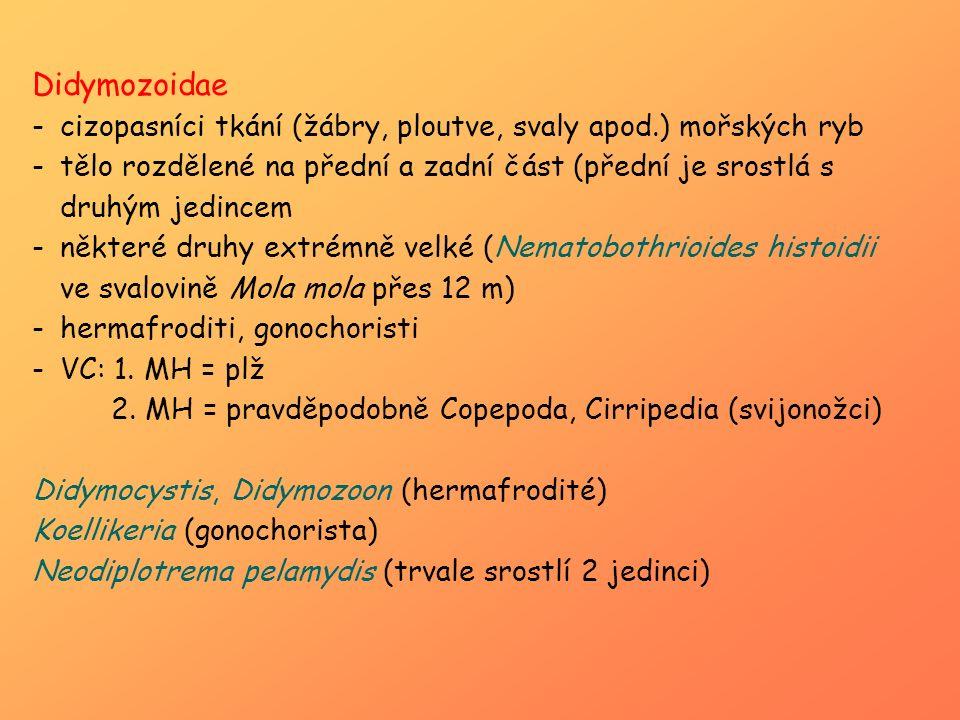 Didymozoidae cizopasníci tkání (žábry, ploutve, svaly apod.) mořských ryb.