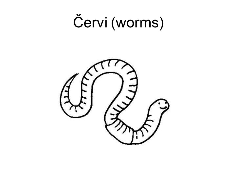 Červi (worms)