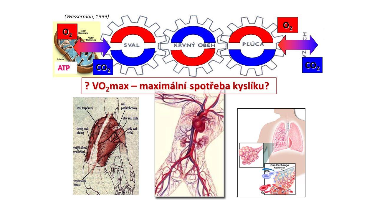 VO2max – maximální spotřeba kyslíku