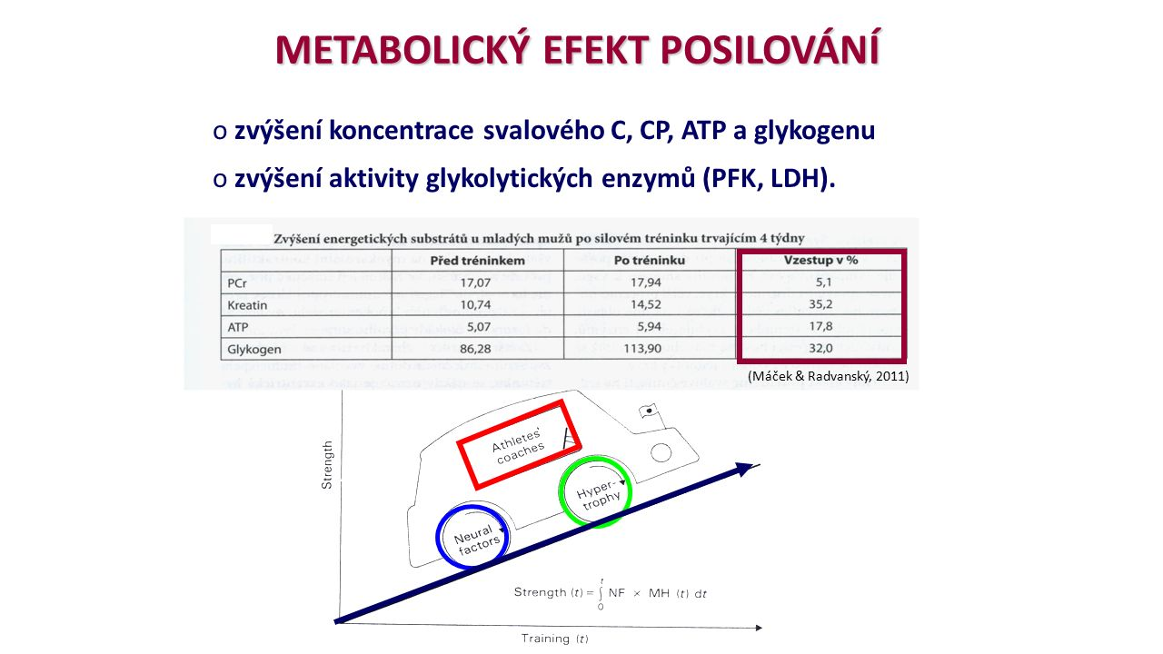 METABOLICKÝ EFEKT POSILOVÁNÍ