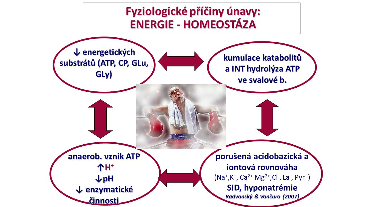 Fyziologické příčiny únavy: ENERGIE - HOMEOSTÁZA