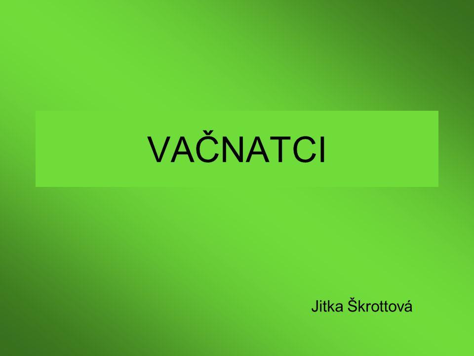 VAČNATCI Jitka Škrottová