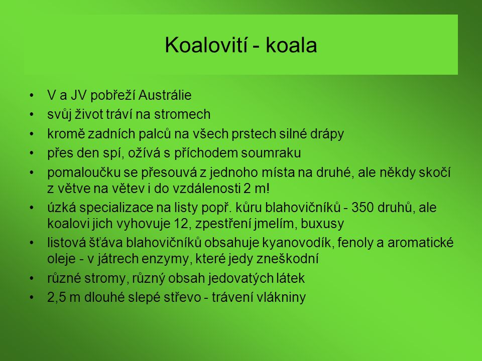 Koalovití - koala V a JV pobřeží Austrálie
