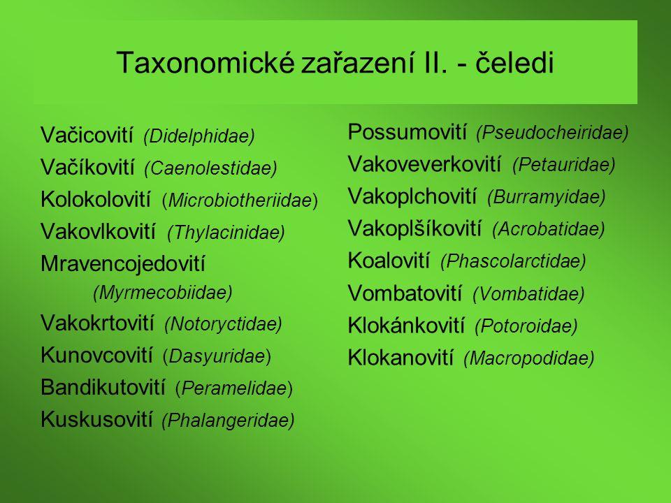Taxonomické zařazení II. - čeledi