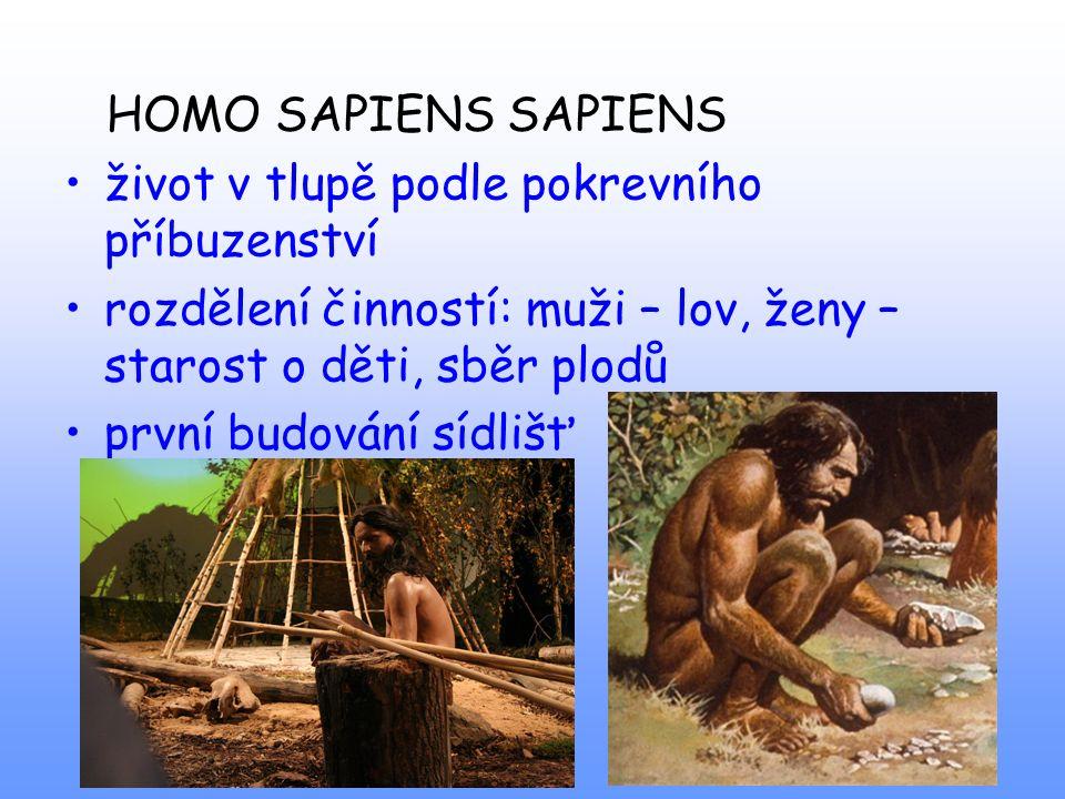 HOMO SAPIENS SAPIENS život v tlupě podle pokrevního příbuzenství. rozdělení činností: muži – lov, ženy – starost o děti, sběr plodů.