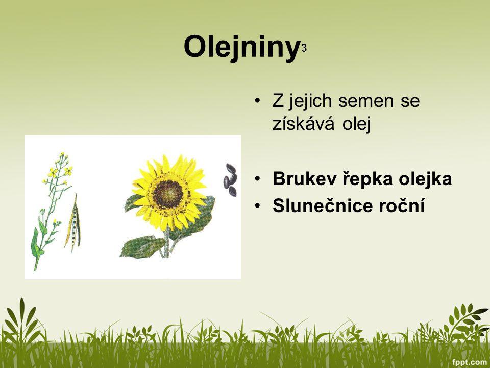 Olejniny3 Z jejich semen se získává olej Brukev řepka olejka