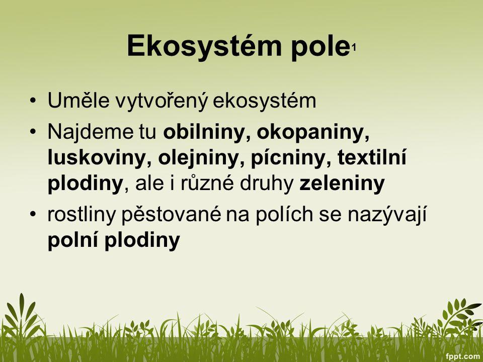 Ekosystém pole1 Uměle vytvořený ekosystém