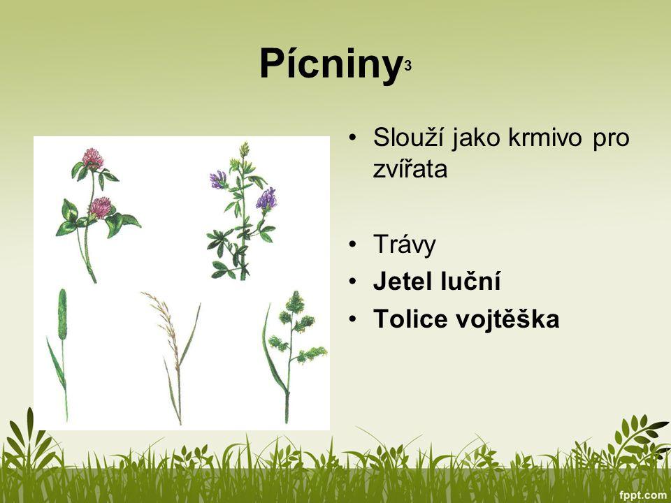 Pícniny3 Slouží jako krmivo pro zvířata Trávy Jetel luční