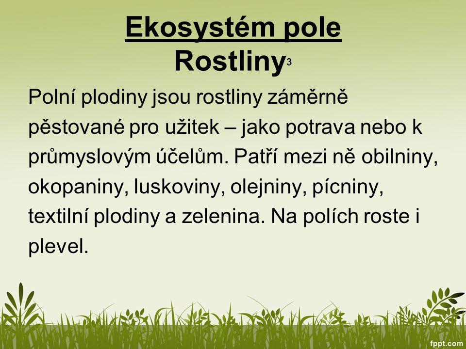 Ekosystém pole Rostliny3