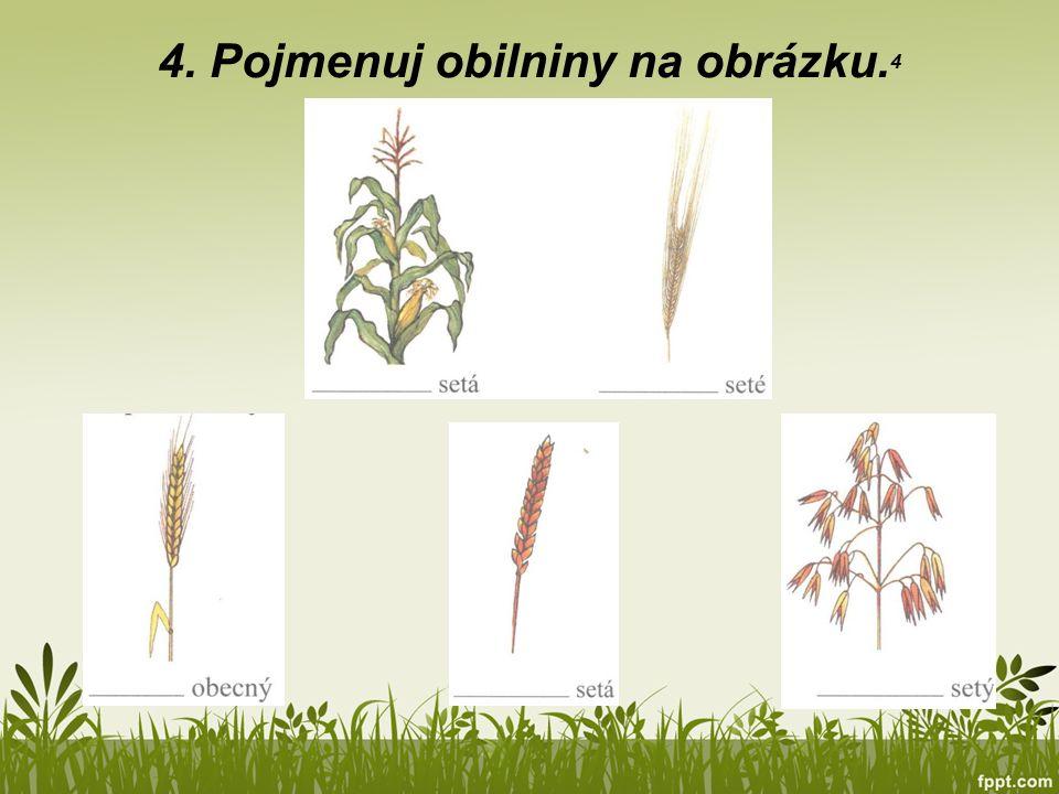 4. Pojmenuj obilniny na obrázku.4