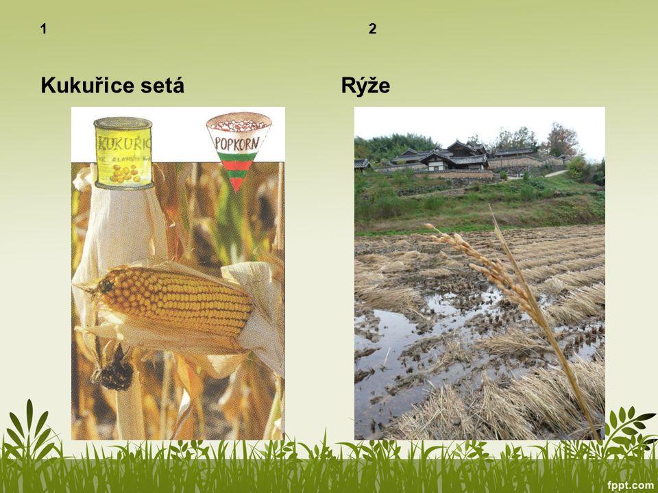 1 2 Kukuřice setá Rýže
