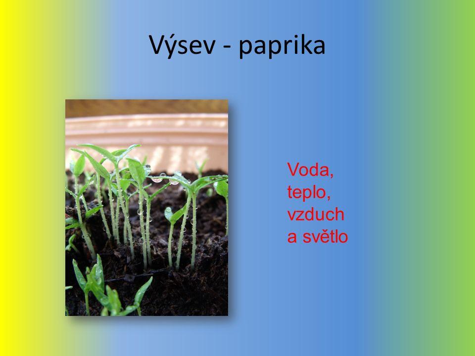 Výsev - paprika Voda, teplo, vzduch a světlo