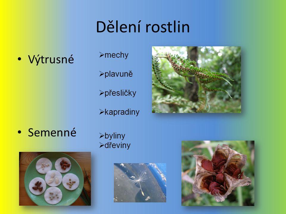 Dělení rostlin Výtrusné Semenné mechy plavuně přesličky kapradiny