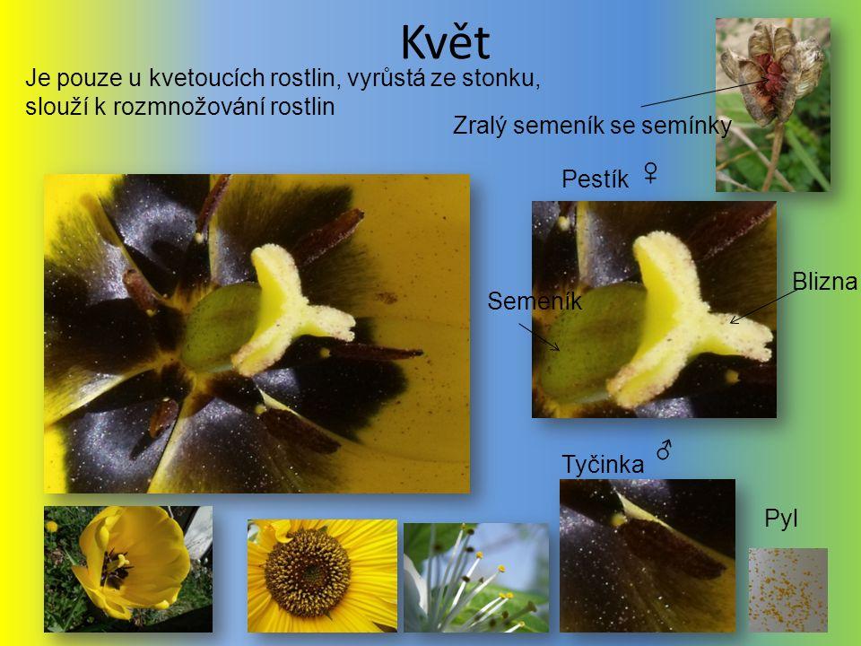Květ Je pouze u kvetoucích rostlin, vyrůstá ze stonku, slouží k rozmnožování rostlin. Zralý semeník se semínky.
