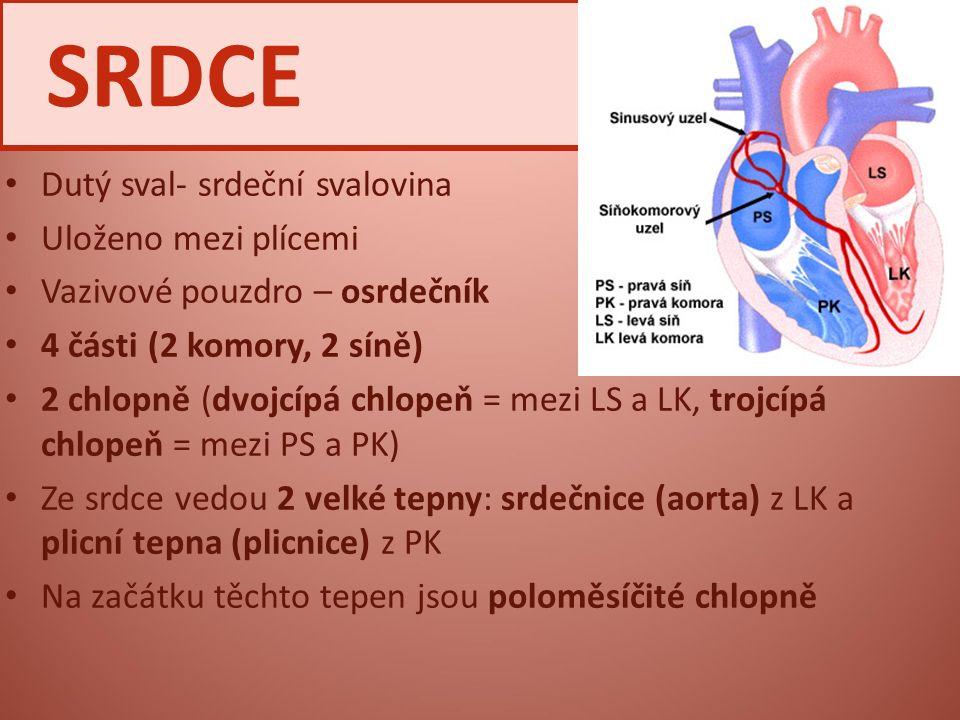 SRDCE Dutý sval- srdeční svalovina Uloženo mezi plícemi