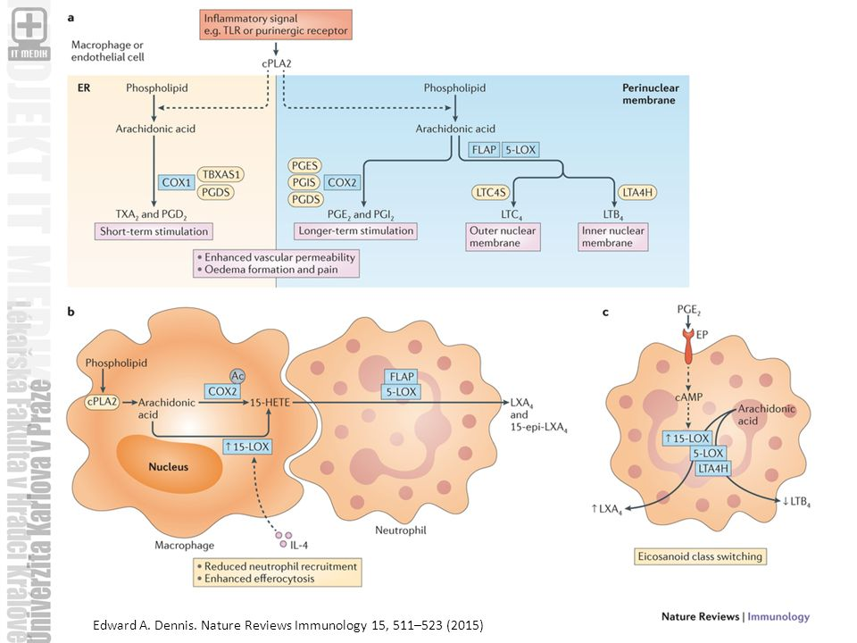 Edward A. Dennis. Nature Reviews Immunology 15, 511–523 (2015)
