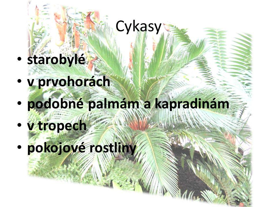 Cykasy starobylé v prvohorách podobné palmám a kapradinám v tropech