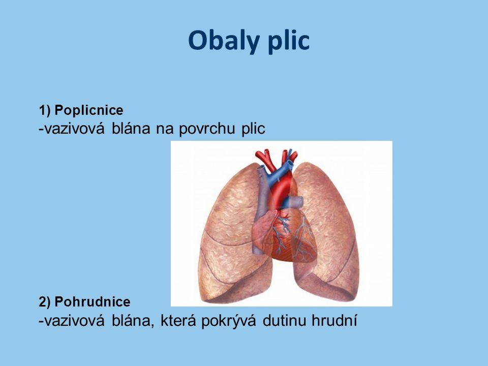 Obaly plic -vazivová blána na povrchu plic
