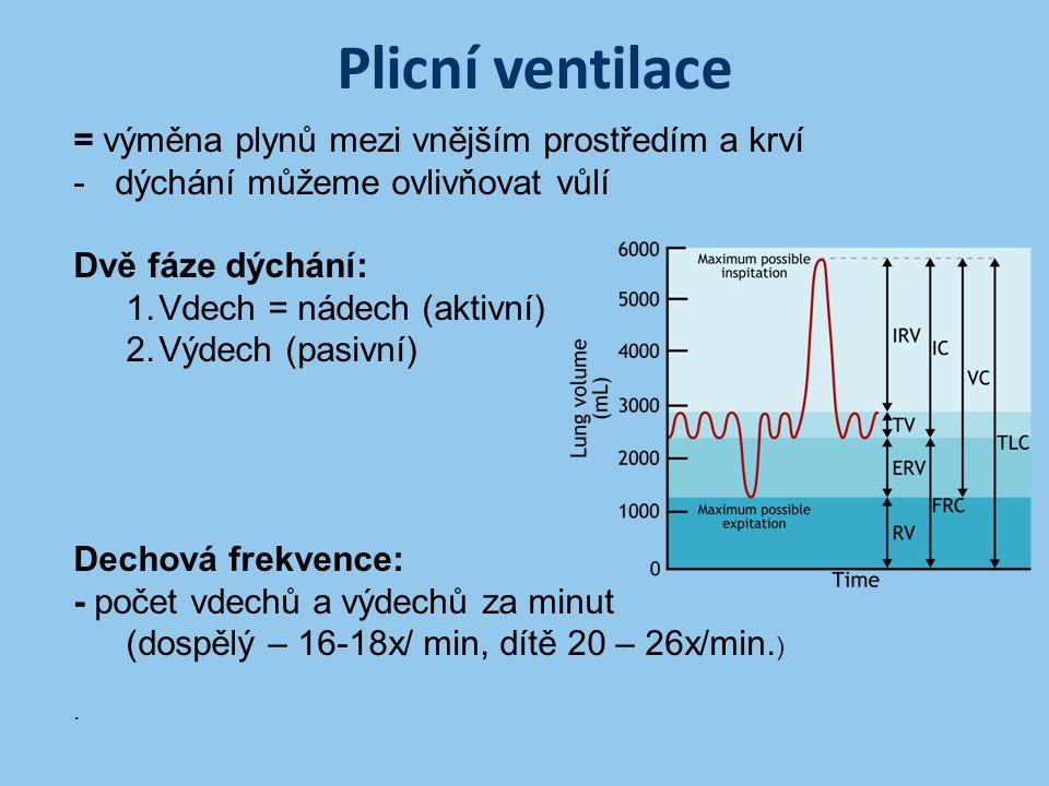 Plicní ventilace = výměna plynů mezi vnějším prostředím a krví