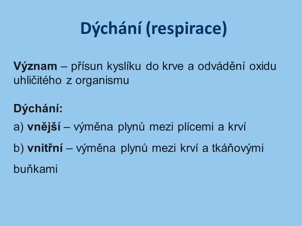 Dýchání (respirace) Význam – přísun kyslíku do krve a odvádění oxidu uhličitého z organismu. Dýchání:
