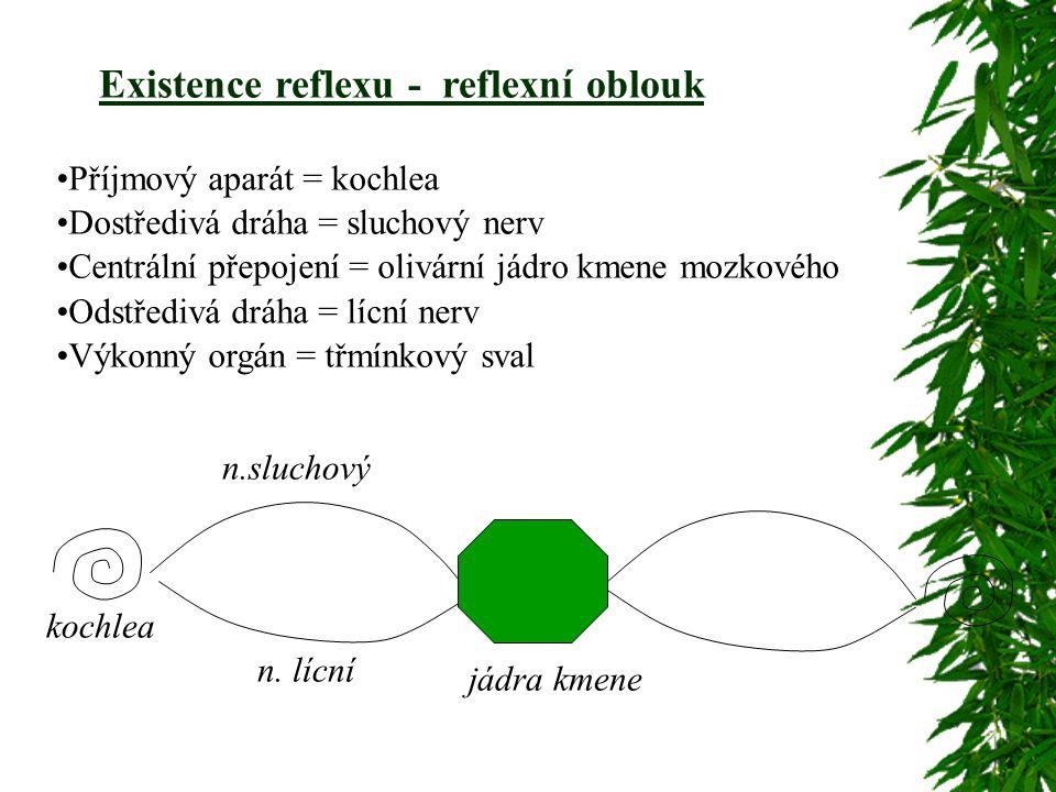 Existence reflexu - reflexní oblouk