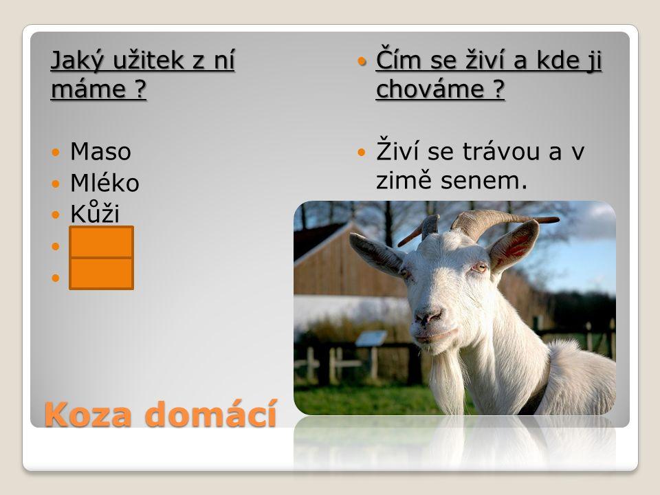 Koza domácí Jaký užitek z ní máme Maso Mléko Kůži Vejce Vlnu