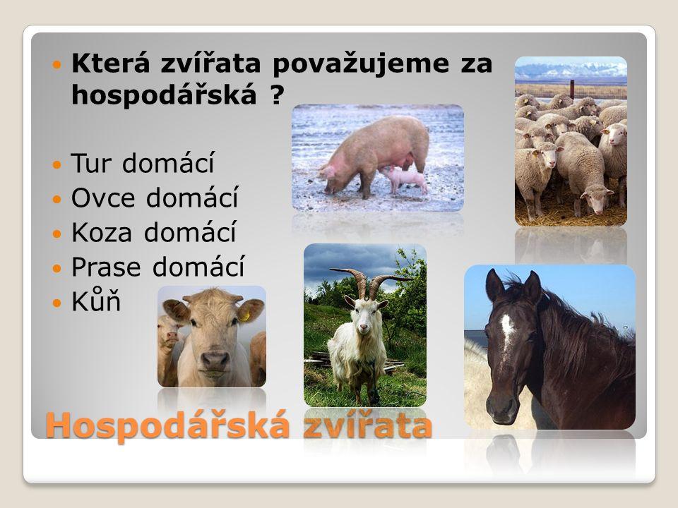 Hospodářská zvířata Která zvířata považujeme za hospodářská