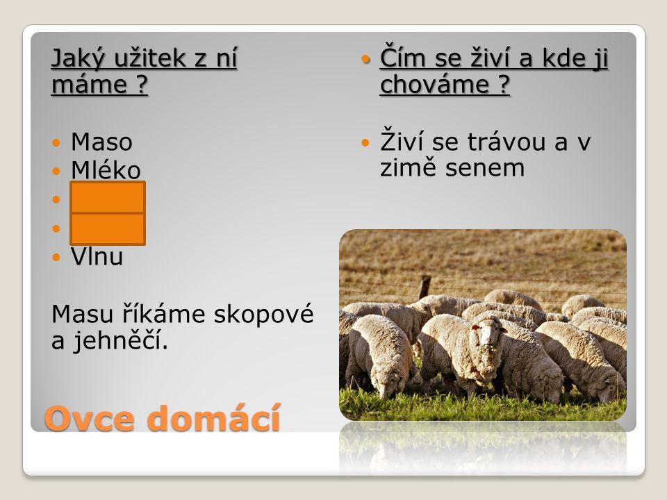 Ovce domácí Jaký užitek z ní máme Maso Mléko Kůži Vejce Vlnu