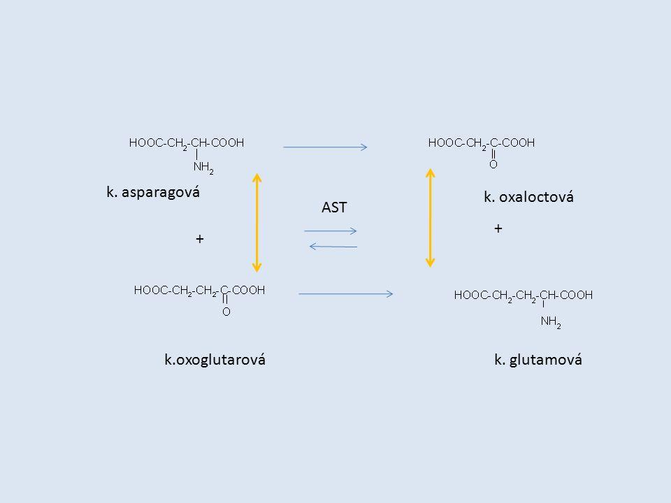 k. asparagová k. oxaloctová AST + + k.oxoglutarová k. glutamová