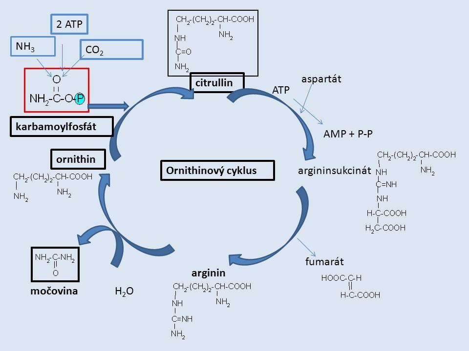 2 ATP NH3. CO2. aspartát. citrullin. ATP. karbamoylfosfát. AMP + P-P. ornithin. Ornithinový cyklus.