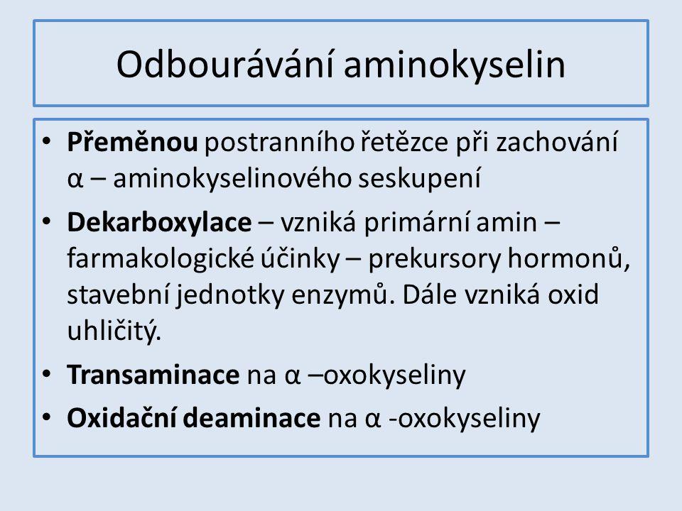 Odbourávání aminokyselin