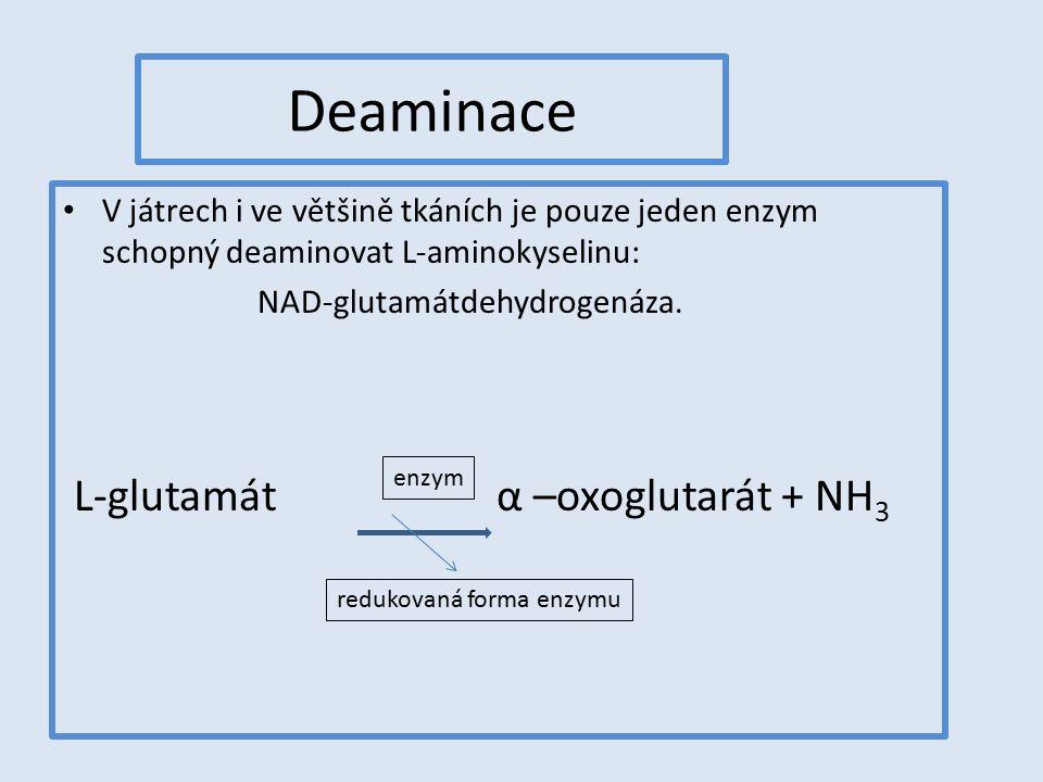 Deaminace L-glutamát α –oxoglutarát + NH3