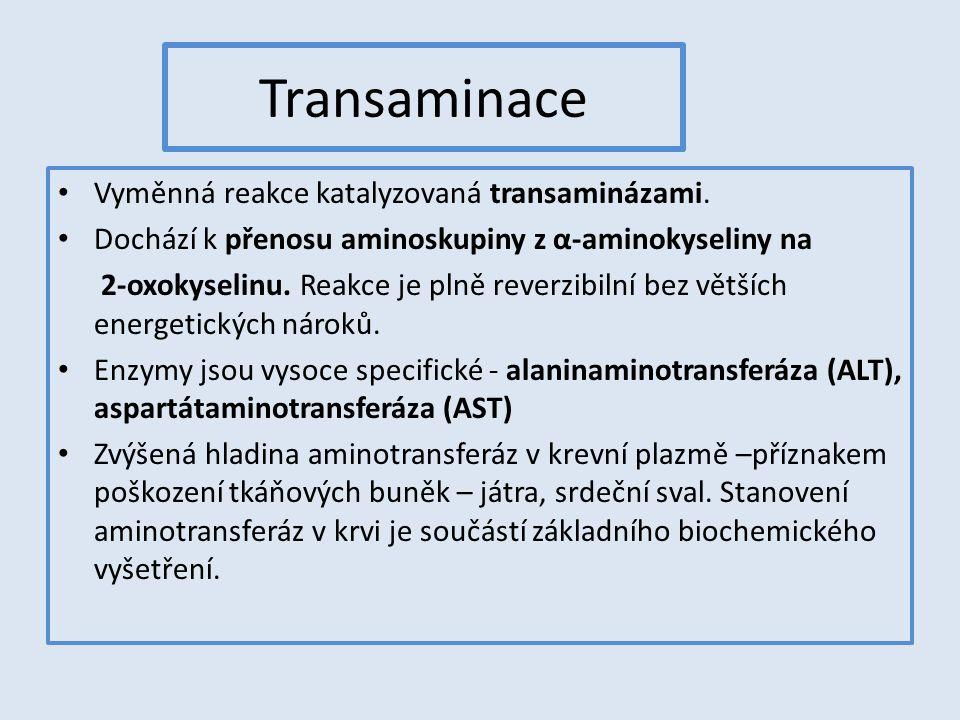 Transaminace Vyměnná reakce katalyzovaná transaminázami.