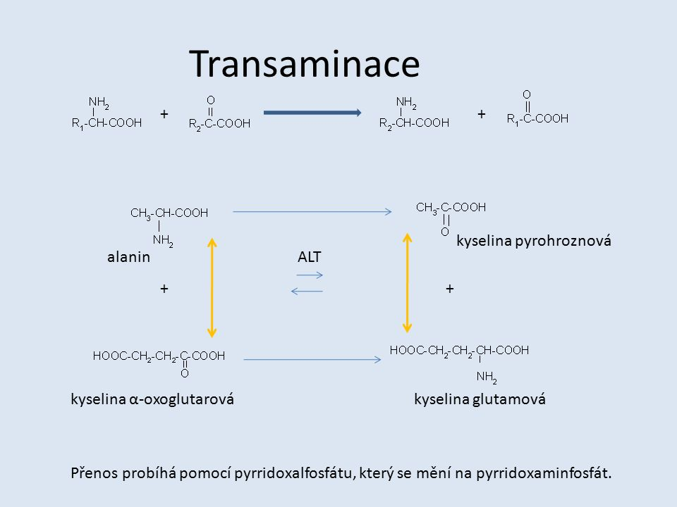Transaminace + + kyselina pyrohroznová alanin ALT + +