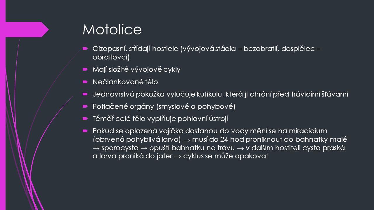 Motolice Cizopasní, střídají hostiele (vývojová stádia – bezobratlí, dosplělec – obratlovci) Mají složité vývojově cykly.
