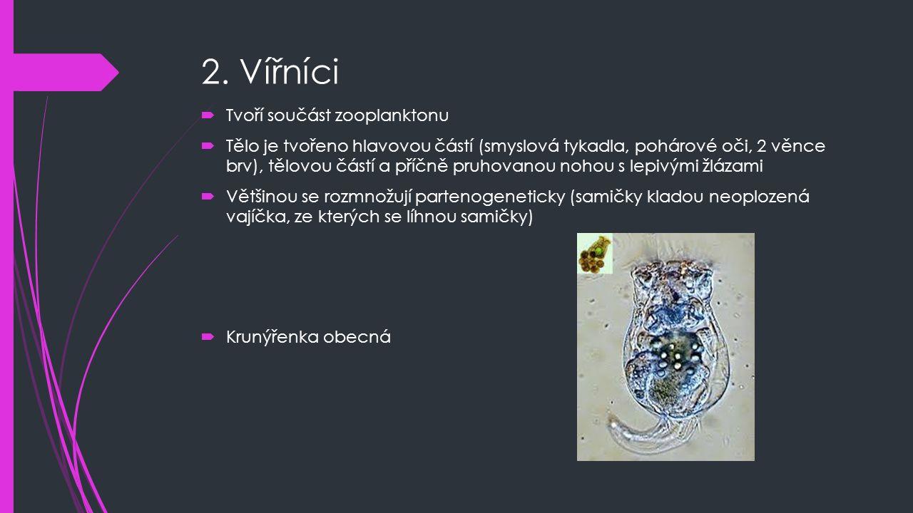 2. Vířníci Tvoří součást zooplanktonu