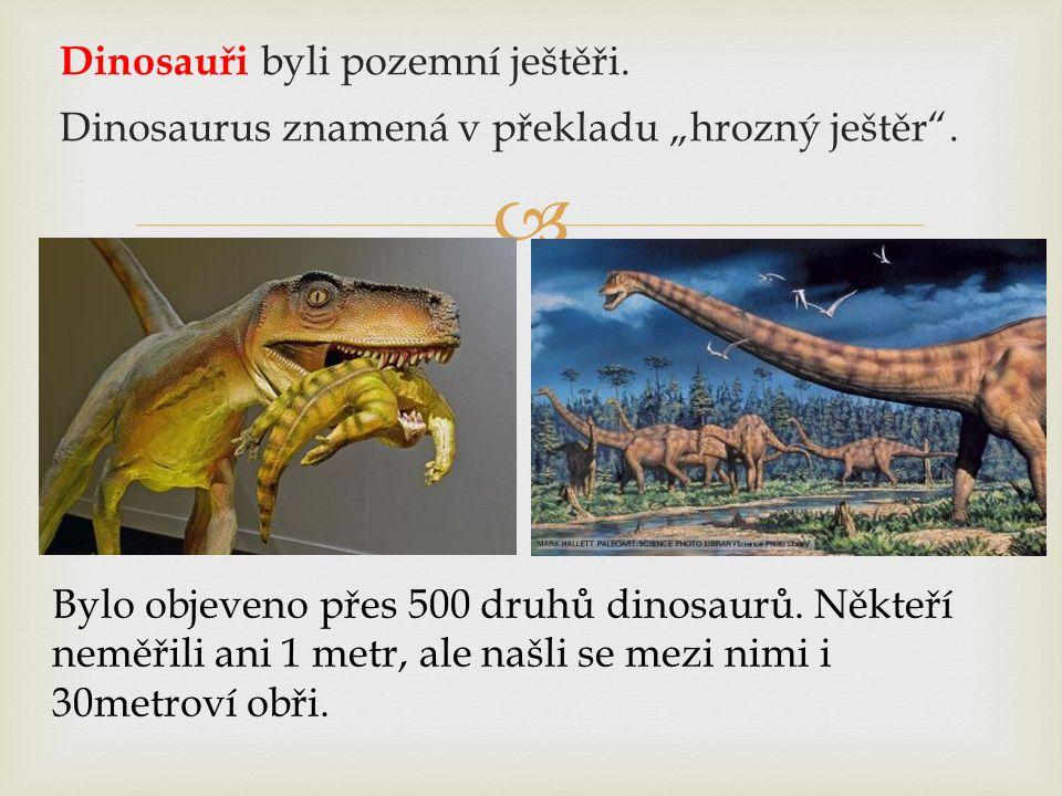 Dinosauři byli pozemní ještěři