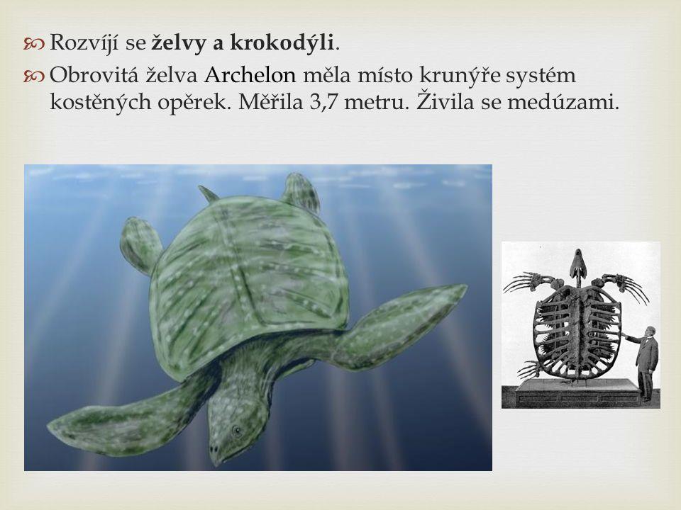 Rozvíjí se želvy a krokodýli.