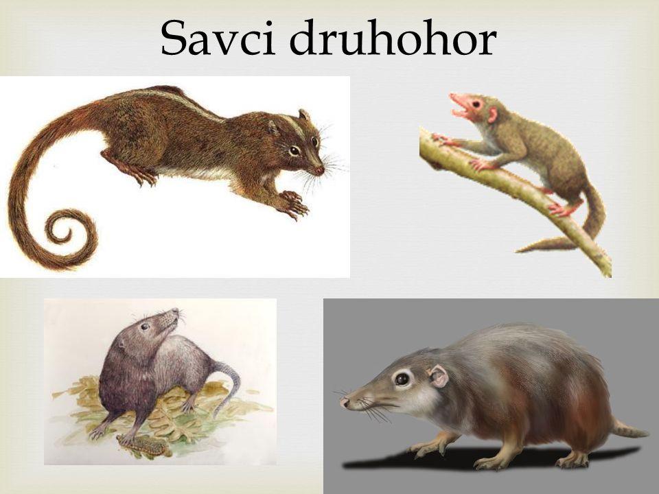Savci druhohor